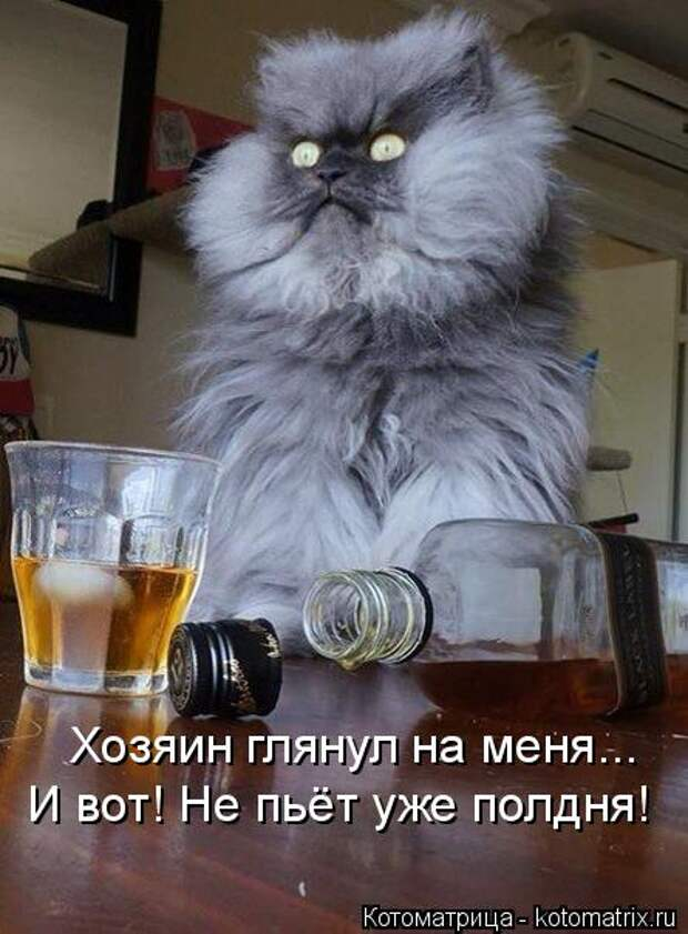 Котоматрица: Хозяин глянул на меня... И вот! Не пьёт уже полдня!
