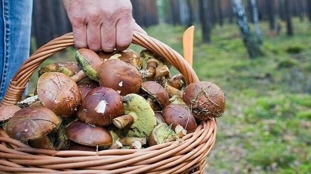 Несколько десятков крымчан отравились грибами