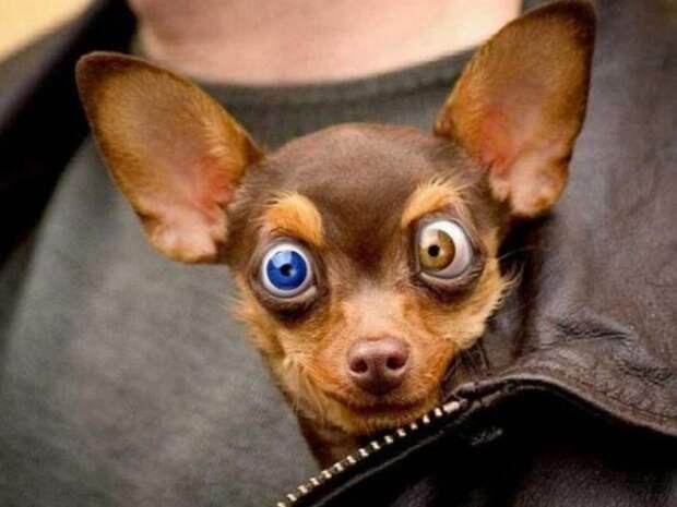 История про собачку Клепу