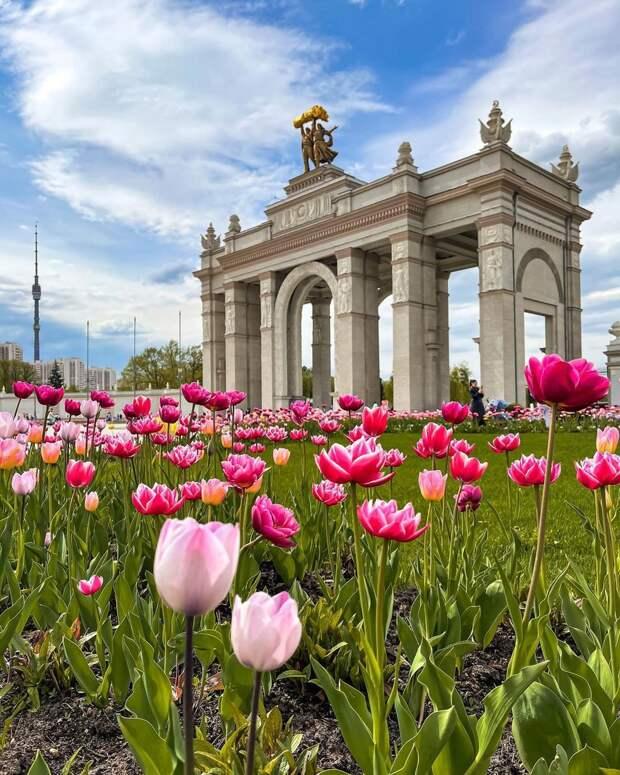 Фото дня: в Останкине расцвели тюльпаны