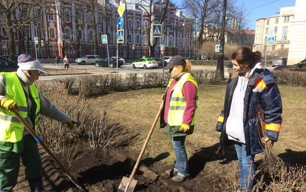 В центре Петербурга начали высаживать первые в этом сезоне деревья: фото