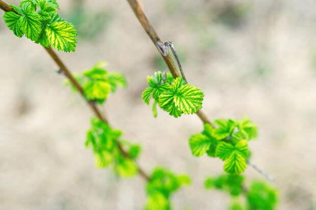 Самые ранние вредители: как не пропустить первую обработку сада