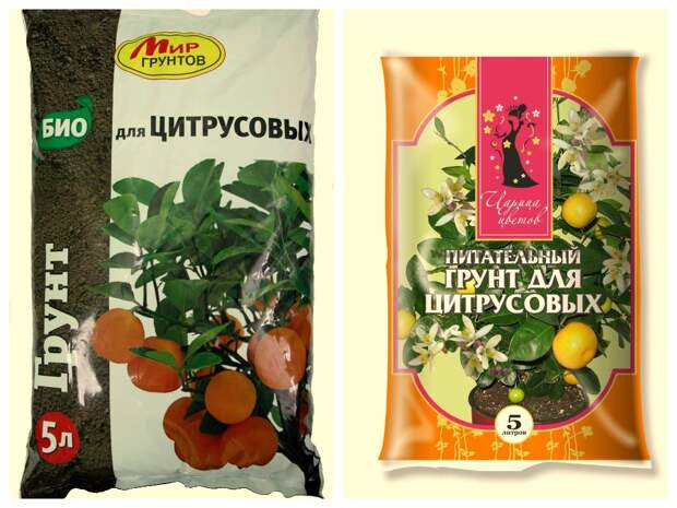 Популярные виды комнатных цитрусовых растений и особенности ухода за ними