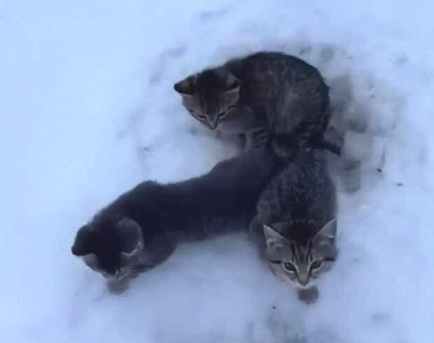 Всего один стаканчик кофе понадобился, чтобы спасти 3 котят. А у доброго парня он как раз был под рукой