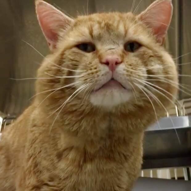 Огромный рыжий кот очутился в приюте и… внезапно заговорил с людьми!