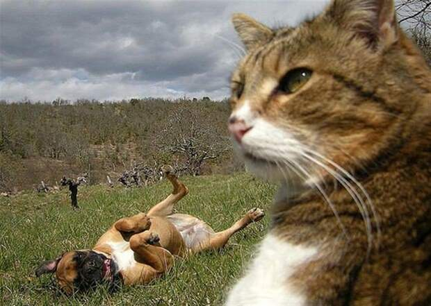 Фотобомбы с котами