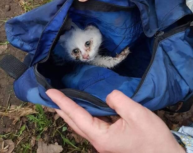 Малыш, которому повезло. ВЛиде сотрудники МЧС спасли котенка, который упал вколодец