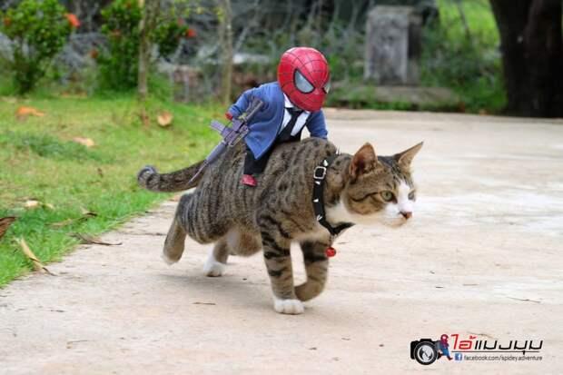 8 эпичных фото приключений Спайдермена и кота