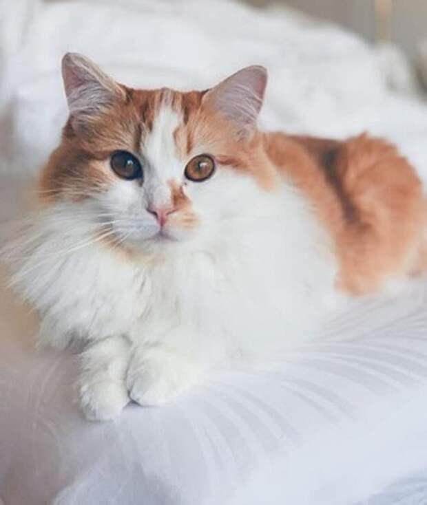 Студентка не планировала заводить кошку, но пройти мимо одинокой мурлыки с янтарными глазами не смогла