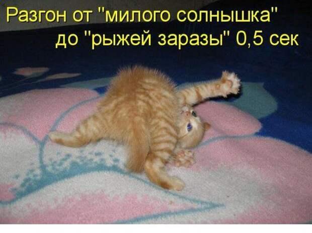 Смешные фотки с прикольными надписями (30 фото)