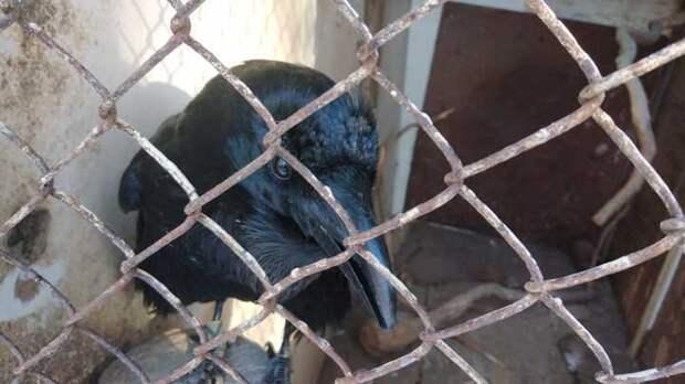 Бездомный приют диких птиц: краснокнижные виды под угрозой смерти из-за чиновников