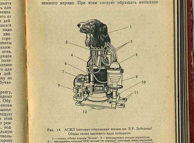 В первый период холодной войны были привлечены все силы советской науки для создания совершенного оружия. В 1958 году стартовал секретный советский проект по созданию робота-киборга. Научным консультантом был лауреат Нобелевской премии В. Мануйлов. В конструировании робота за исключением конструкторов участвовали медики и инженеры. Для экспериментов с целью подтверждения безопасности для человека предлагались мыши, крысы и собаки. Рассматривался вариант экспериментов над обезьянами, но выбор пал на собак, так как они лучше поддаются дрессировке и более спокойны чем обезьяны. Впоследствии этот проект получил имя