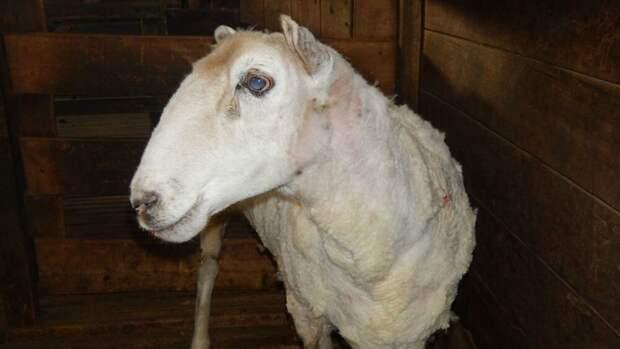 Зоозащитники нашли животное, которое покинули хозяева, но не могли понять, кто именно перед ними