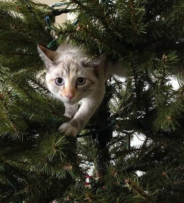 Может, ну его, этот Новый год? животные, не любят, новый год, планы, смешные, фото