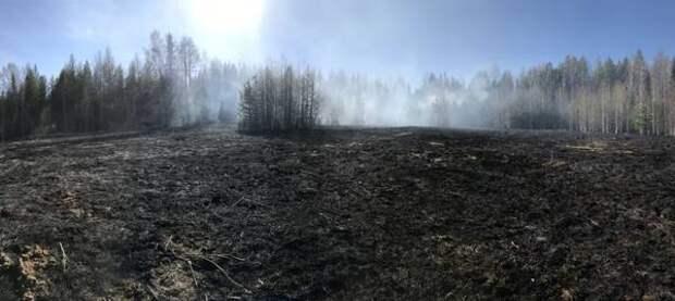 В Ухте локализовали лесной пожар рядом с Успенским кладбищем