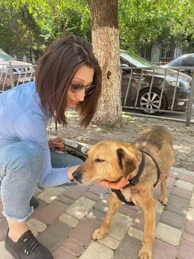 В Симферополе нашелся пес Везунчик, который удрал из стационара, не дождавшись новых хозяев