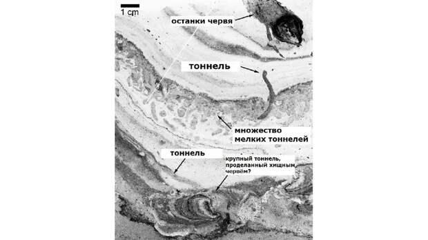 Ученые нашли древнюю дорогу, проложенную доисторическими обитателями океана