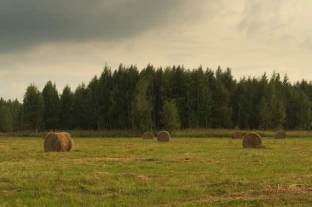 В 15 районах Удмуртии началась заготовка корма для зимовки скота