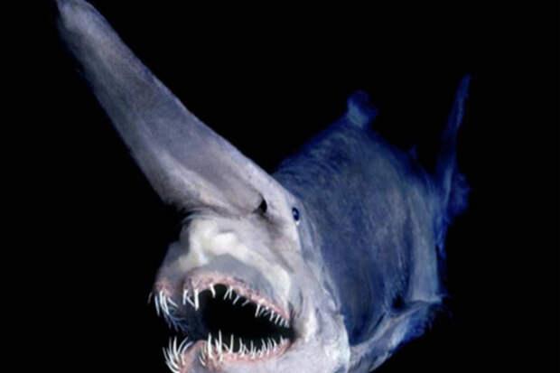 Мрачные тайны Марианской впадины: существа, которые прячуются в бездне