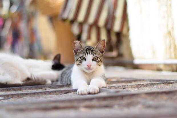 Растяжка Эс-Сувейра, город, животные, кот, марокко, проект, фотограф