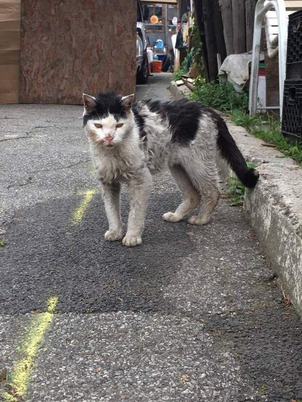 Он рухнул у её ног, моля о помощи… Зоозащитница спасла голодного кота