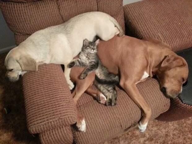 10. Полное взаимопонимание животные, жизнь, кот, питомец, семья, собака, фото