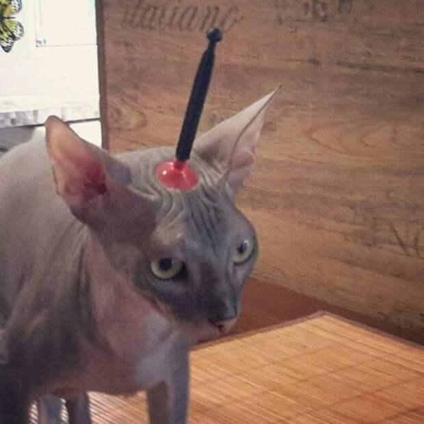 Попадание присоской в голову коту