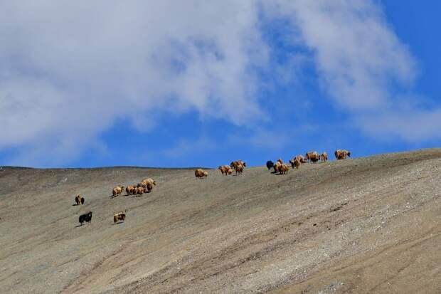 Мужчина потерялся в горах: неделю жил и ел рядом с волками