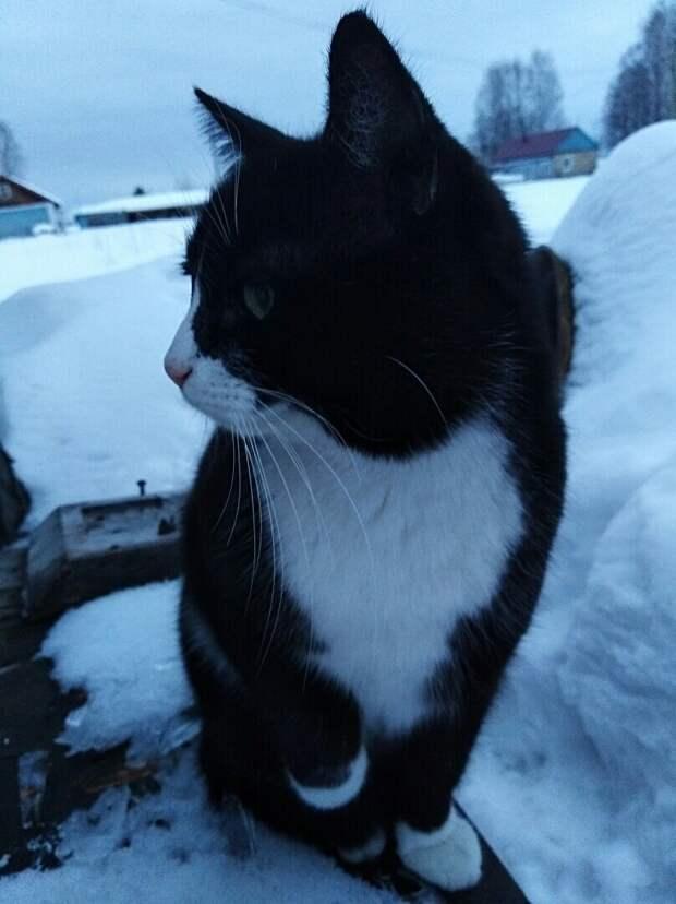 Кот не желал принимать нового котенка в доме. И однажды я разговорилась с Барсиком по душам