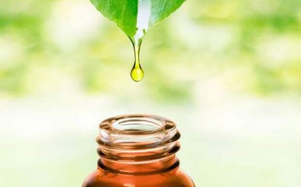 Как эфирные масла влияют на энергетику человека?