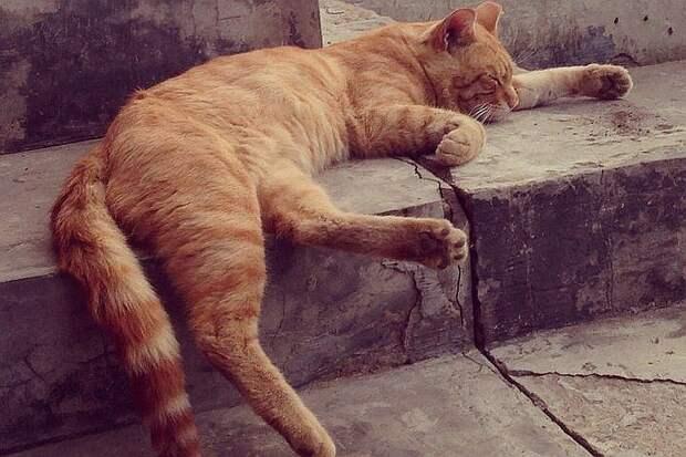 Кот-богатый наследник Фото: социальные сети