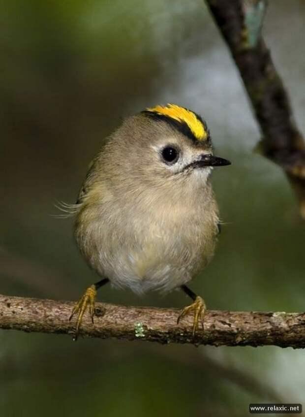 Разноцветный мир птиц (94 фото)