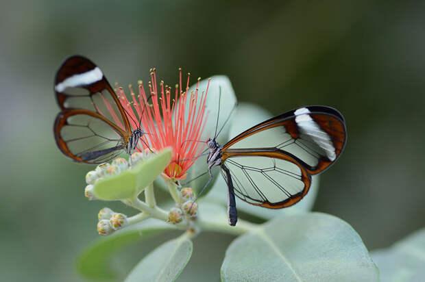 caterpillar-moth-butterfly-before-after-metamorphosis-8-2
