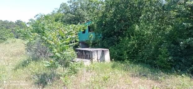 Жителя Кировской области оштрафовали за выращивание деревьев на участке