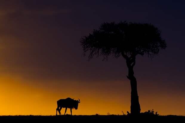 afrikanskie zakaty 14 Потрясающие африканские закаты от Пола Гольдштейна