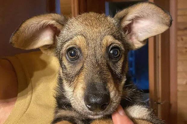 «Нам обещали корги»: разочарованные хозяева бросили щенка назаправке