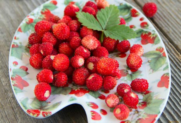 Земляника была любимой ягодой Александра I. /Фото: i.artfile.ru