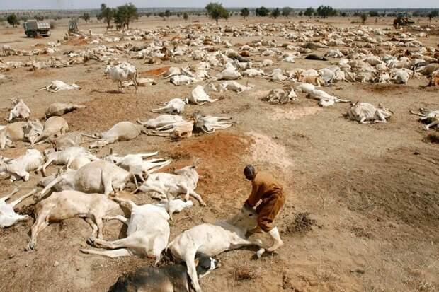 Запад ввёл в дискурс тему уничтожения животных ради климата