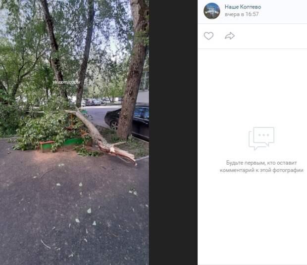 Песочница на Коптевской выдержала удар упавшей ветки дерева