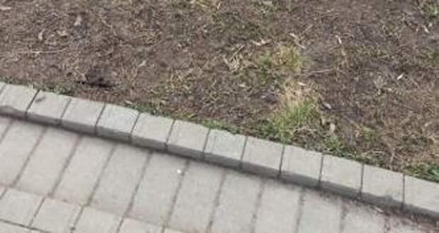 Возле жилого дома на Псковской убрали опасный штырь