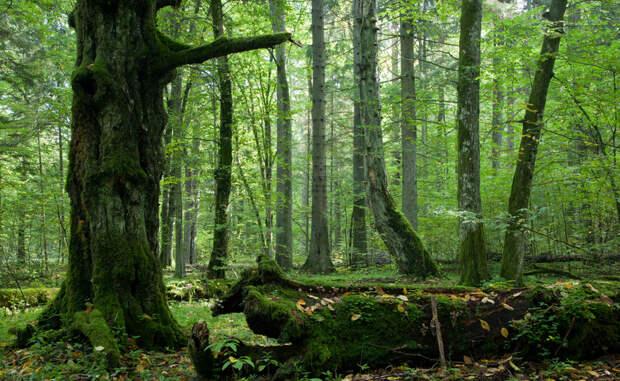 Беловежская пуща Белоруссия, Польша В большинстве европейских древних лесов всегда чувствуется скорое наступление зимы — даже если вокруг сейчас царит лето. Короли этой местности использовали Беловежскую пущу как свои личные охотничьи владения, теперь же здесь раскинулся Национальный парк.