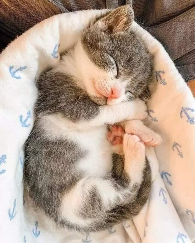 Крошечному котенку, брошенному на произвол судьбы, помогли выжить бульдоги