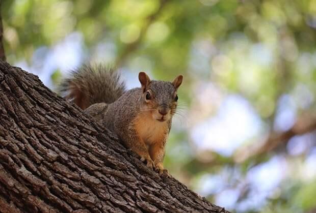 В Чистяковской роще Краснодара ради белок высадят ореховые деревья