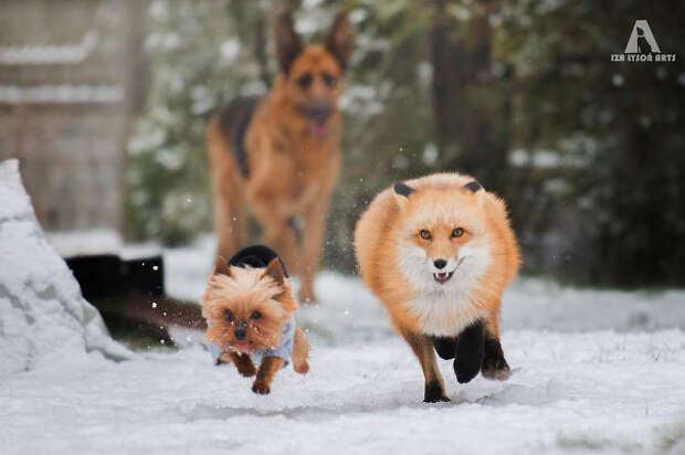 31. Еще одна интересная семья животные, жизнь, кот, питомец, семья, собака, фото