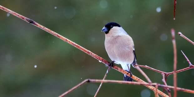 В Лианозовском парке не место птичьему пению под фанеру – опрос в паблике