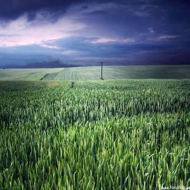 красивые поля фото