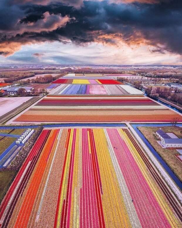 4. А это поле с тюльпанами в Голландии. Красиво, правда? заводы, привычные продукты, производство, ферма