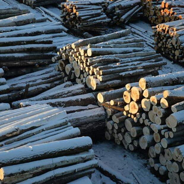 В Красноярском крае выявили новые эпизоды незаконной вырубки леса