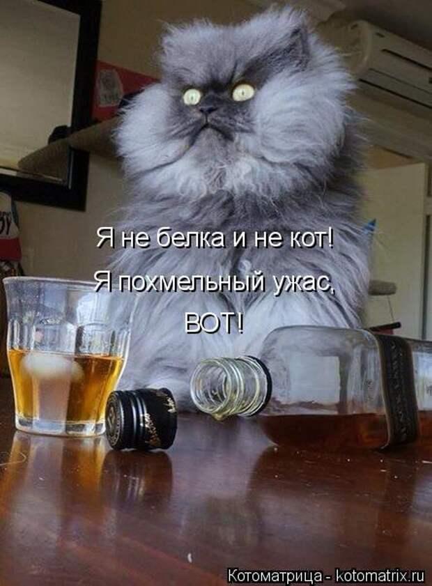 Котоматрица: Я не белка и не кот! Я похмельный ужас, ВОТ!