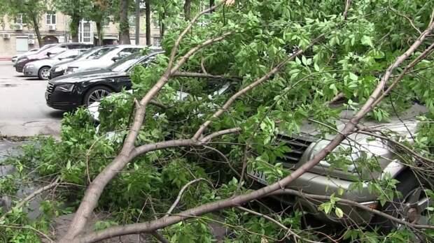Шесть человек получили травмы из-за сильного ветра и грозы в Москве